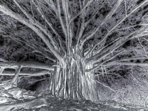 -stromweb.jpg