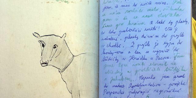 Tereza Říčanová: Deník krávy – Book of Cows. work in progress (2018)