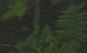 Miloš Šejn: Landscape — video (1994). Photographer: author´s archive
